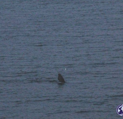 Avistando ballenas