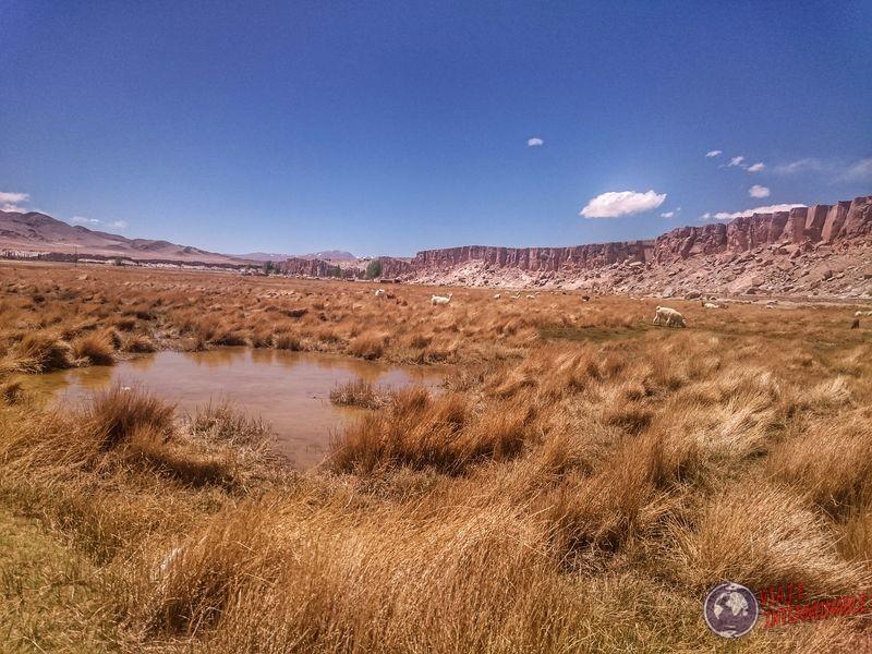 Antofagasta de la Sierra esperando