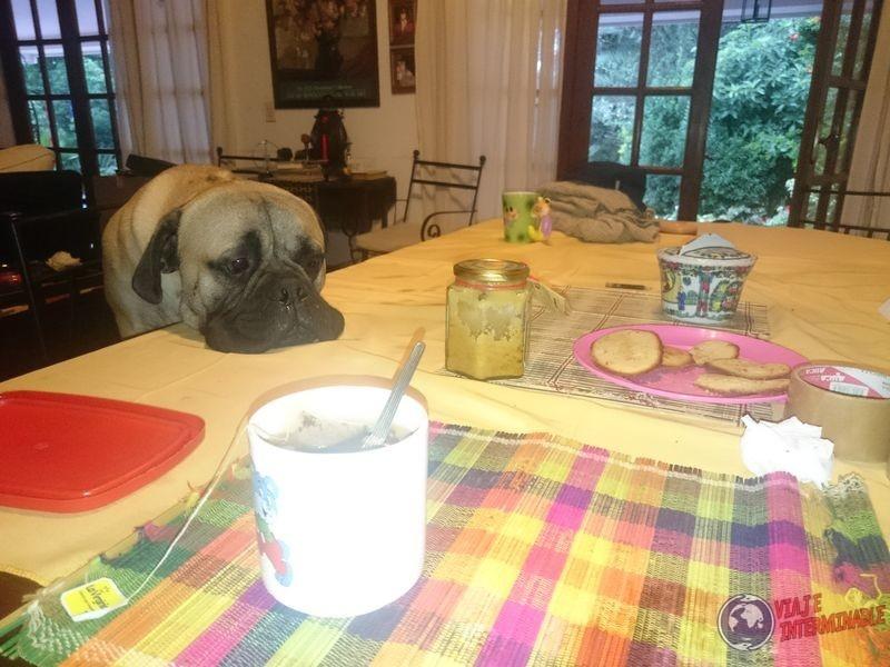 Otto mirando el desayuno