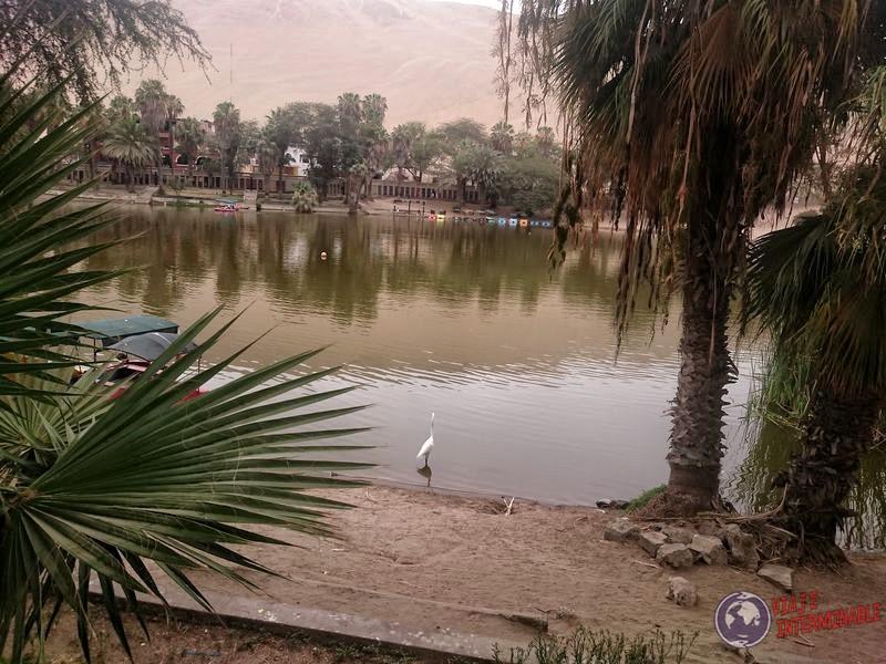Oasis de Huacachina (5)