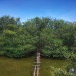 Como visitar manglares en Sudamerica gratis
