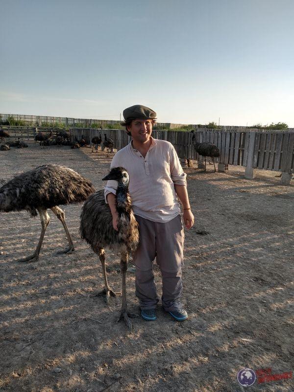 con emu blancanieves en criadero aves