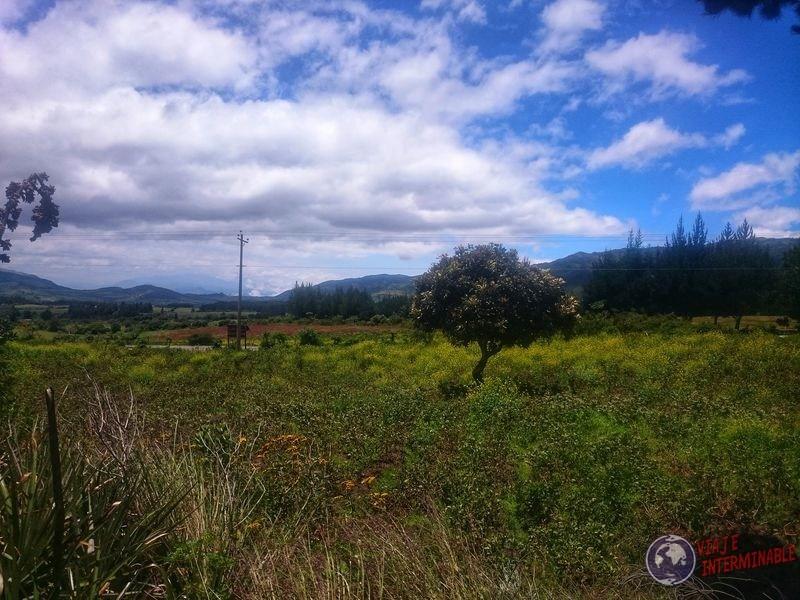 Arbolito en campo cerca de Laguna cuicocha Ecuador