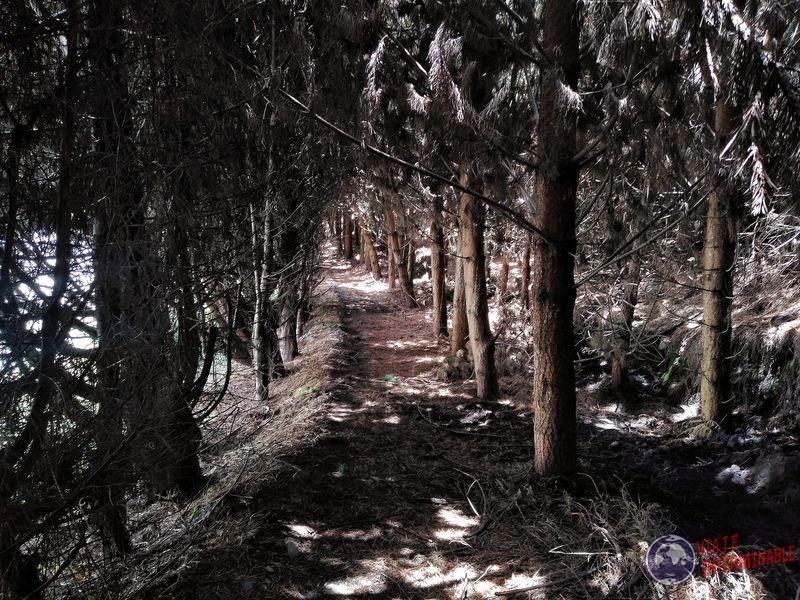 Bosque en granja organica Pifo Ecuador