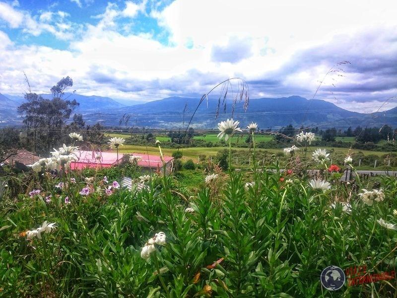 Campo detras de flores en laguna Cuicocha Ecuador