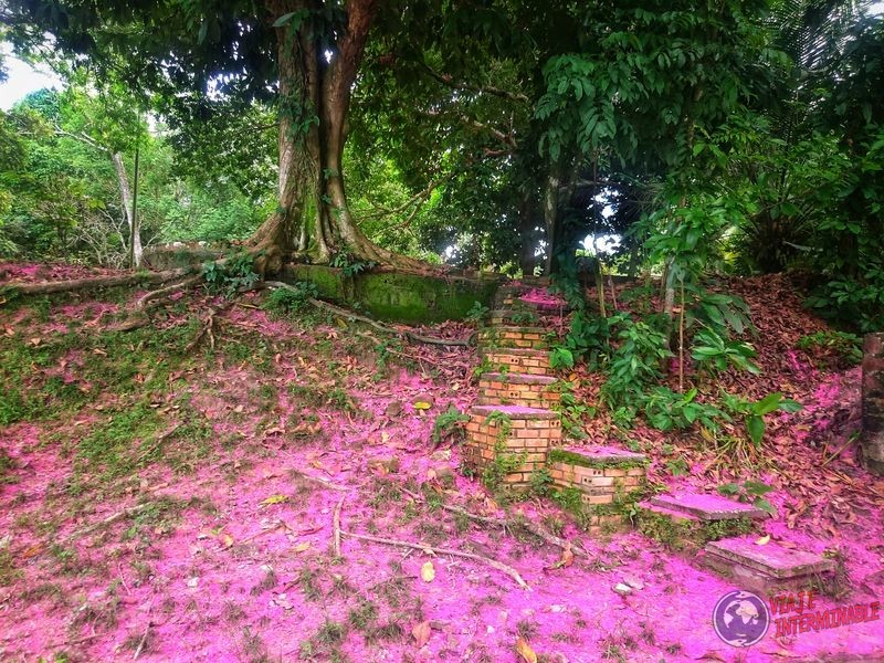 Caminos hermosos cerca zoo Manaos