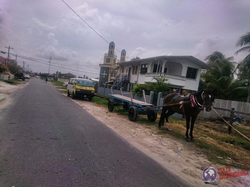 Carritos de caballos en Georgetown Guyana