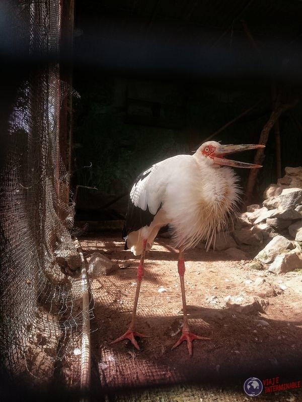 Garza en zoologico Georgetown Guyana