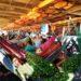 Travesía por el Amazonas – Parte III – Brasil: El rio Amazonas en barco de carga hasta Manaos