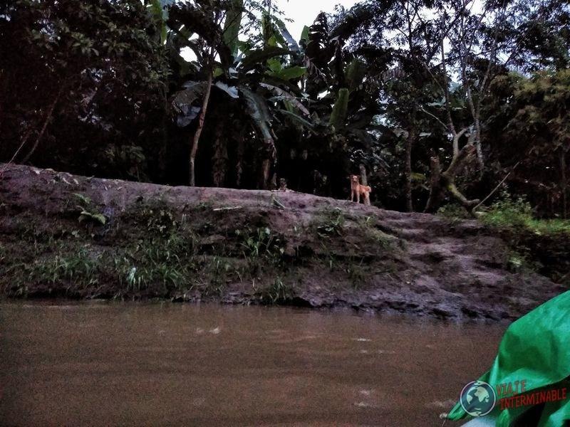 Isla donde vivia señor canoa de rocafuerte a Pantoja
