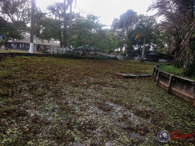 Jardin Botanico en Georgetown Guyana