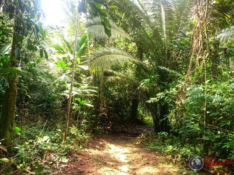 Selva Waorani Pompeya Ecuador