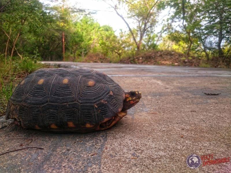 Tortuga en Parque Papagayos Boa Vista