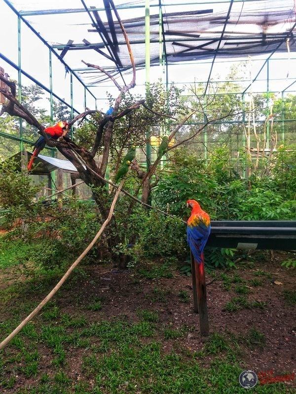loros en parque de los papagayos