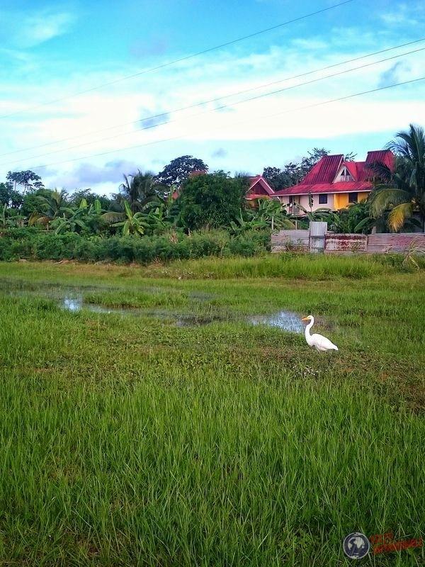 Garza en Matoury Guayana Francesa