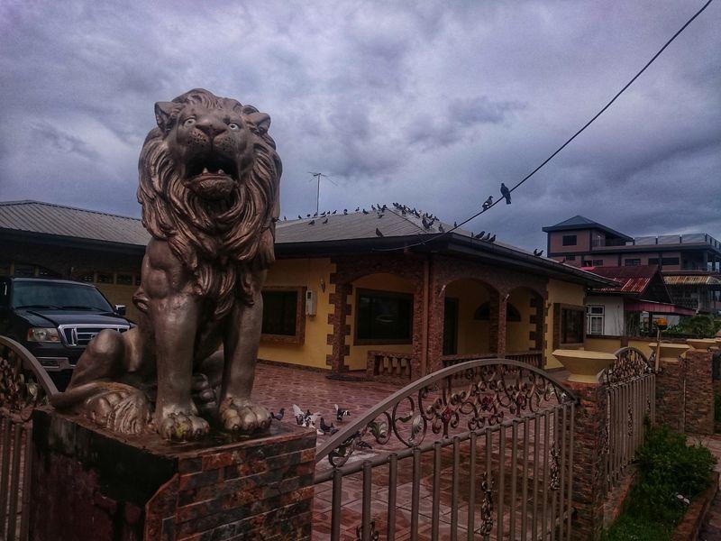 León en casa de Paramaribo Surinam