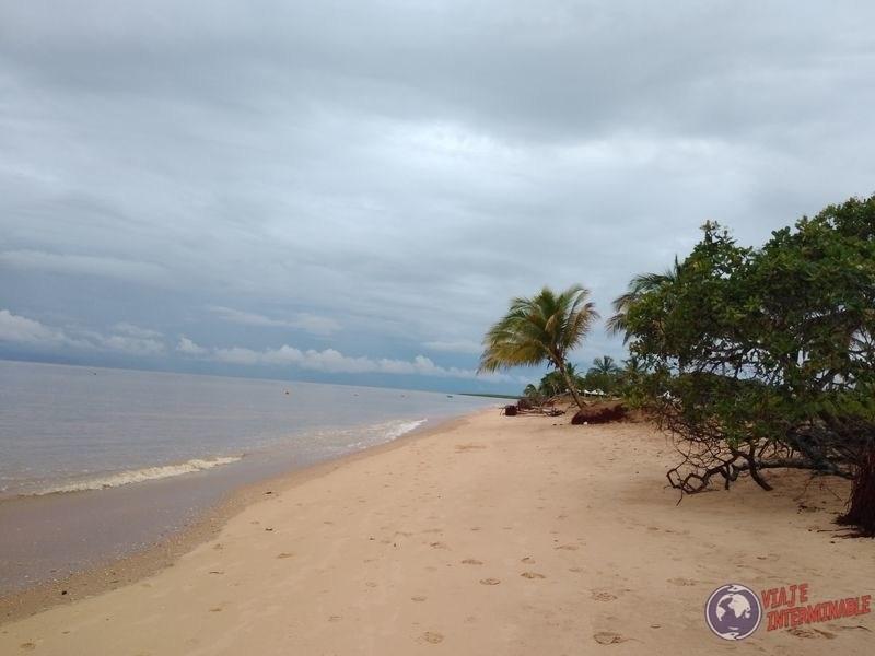 Playa Yalimapo tortugas Guayana Francesa
