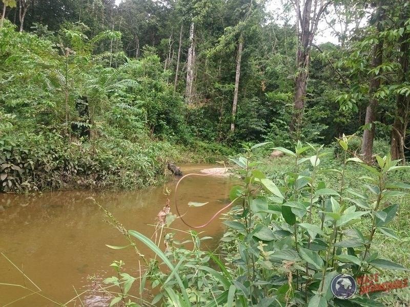 Selva de Kourou Guayana Francesa