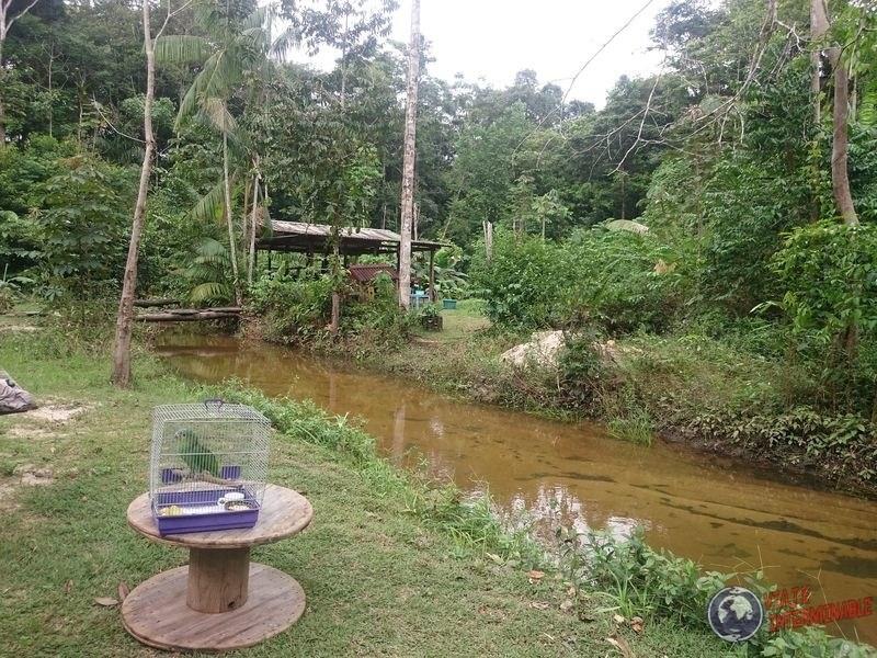 Selva de Kourou con Loro amazonico Guayana Francesa