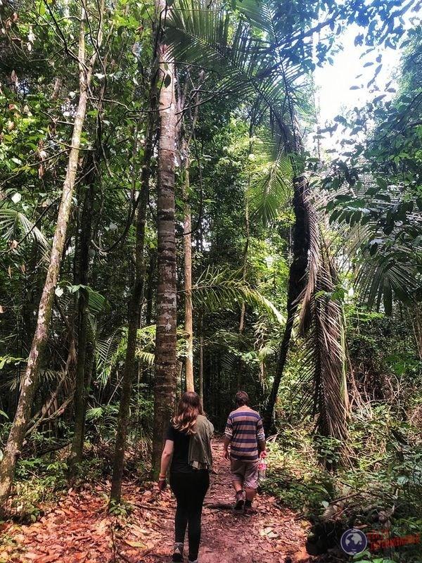 Trekking montaña monos caminando Kourou Guayana Francesa