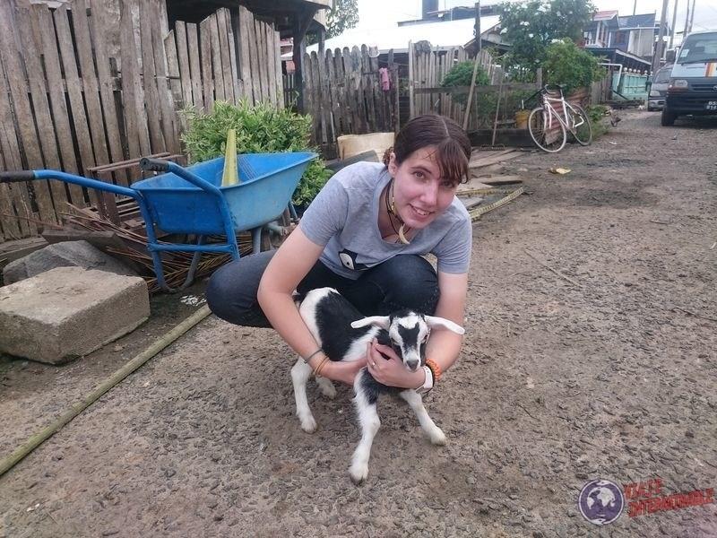 Con cabra en Corriverton guyana