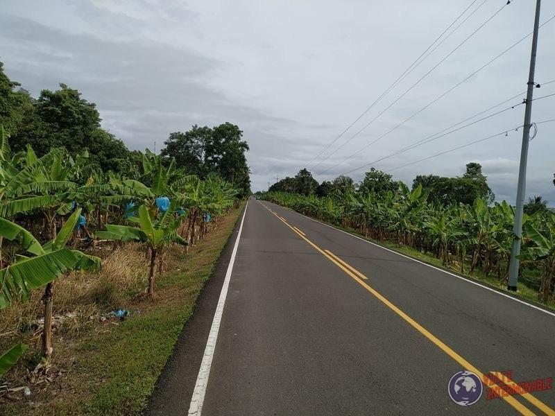 Plantaciones de banana costa de Colombia