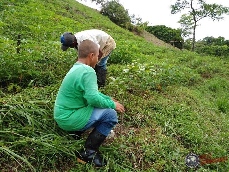 Trabajando los campos en Chigorodo Colombia