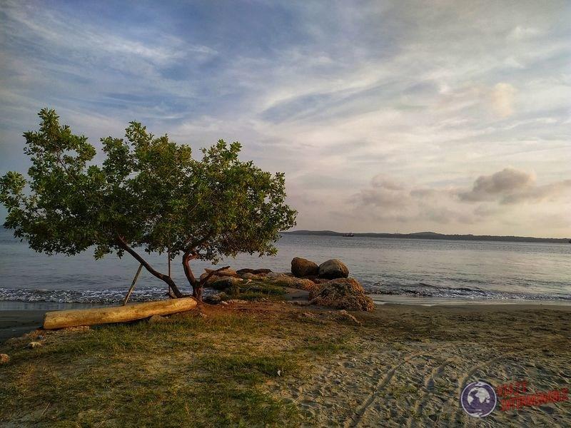 Árbol en costa playa Cartagena Colombia