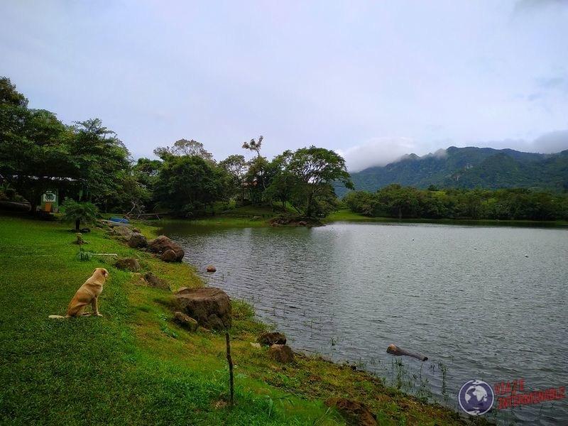 Perrito en la laguna San Carlos panama