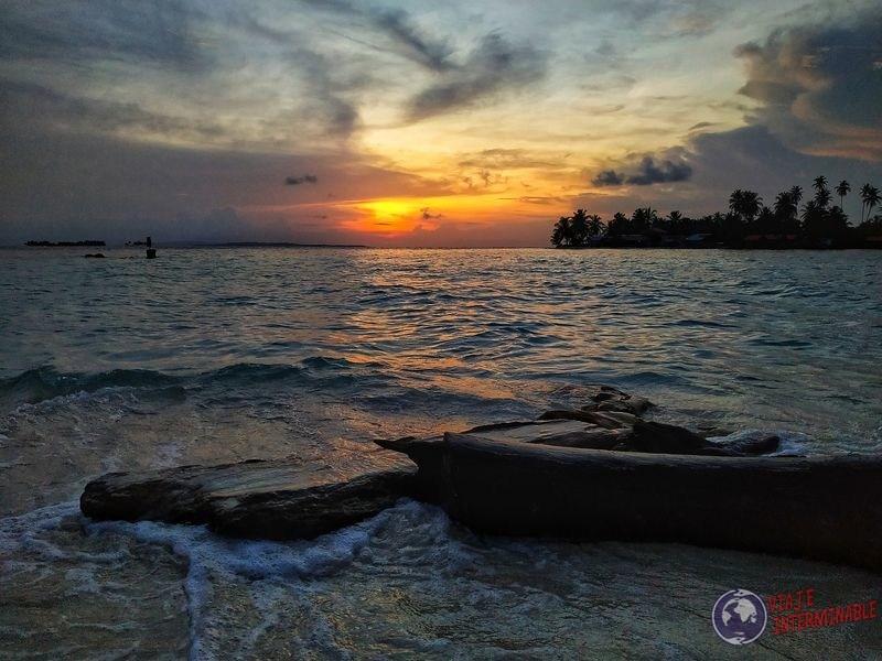 troncos en playa caribe san blas panama