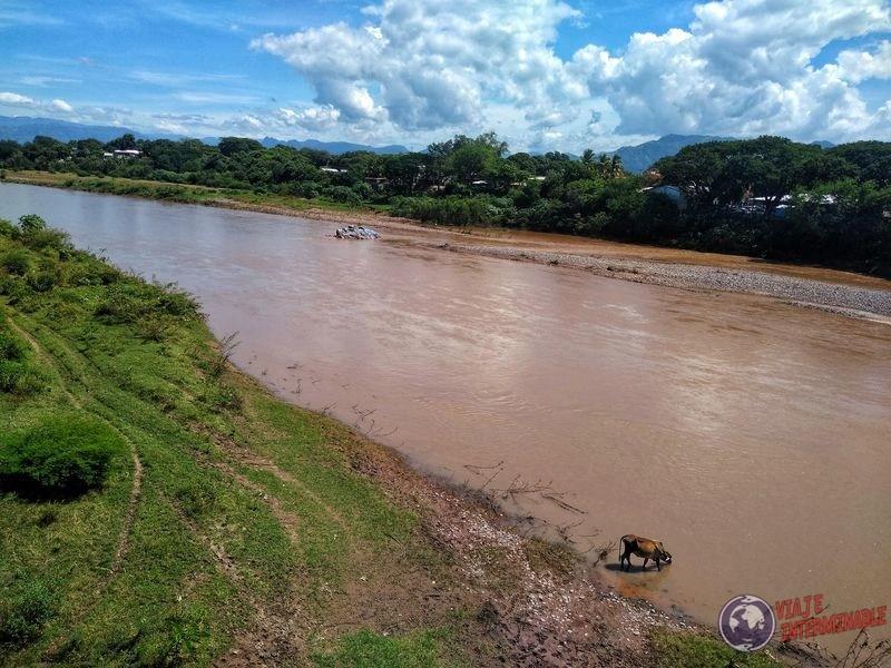 Río Choluteca Honduras con vaca
