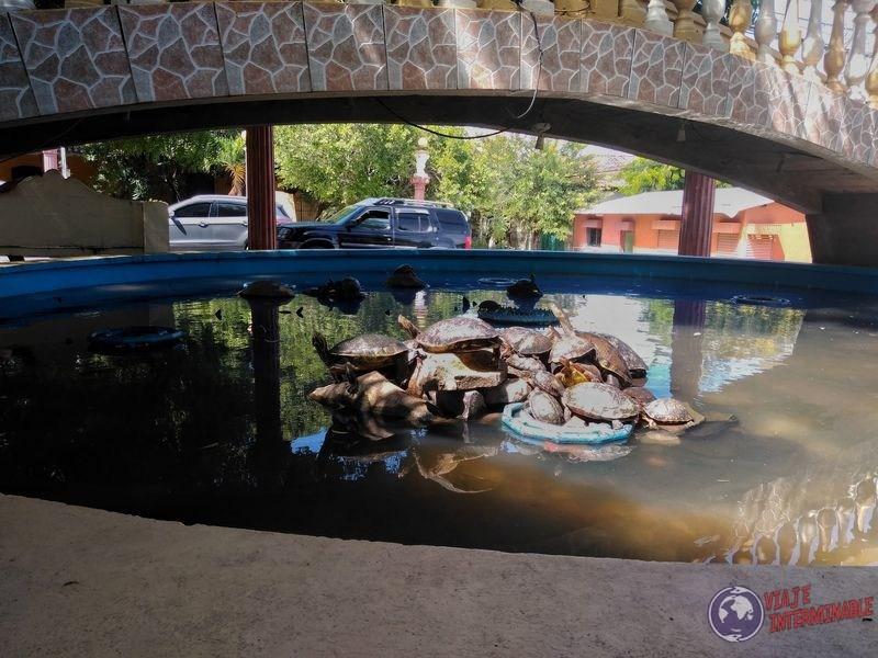Tortugas fuente Choluteca Honduras