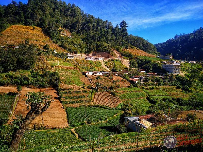 Plantaciones en Guatemala camino a Coban