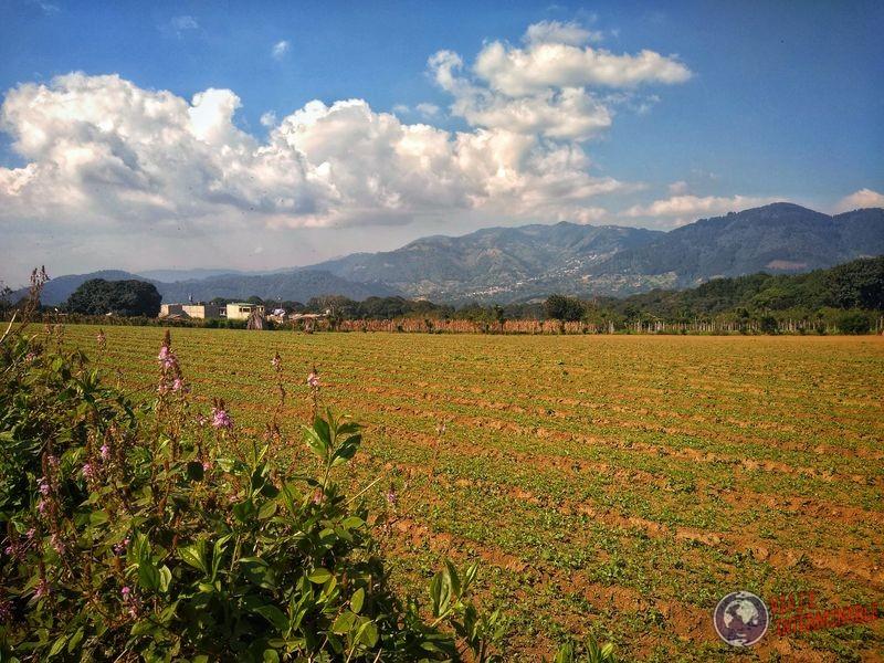 Plantaciones en camino ciudad vieja guatemala