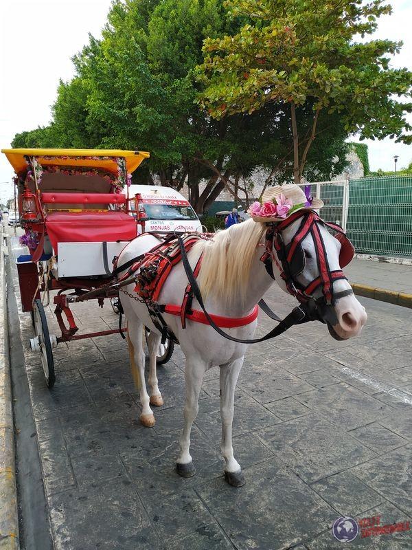 Carreta Caballo Merida Mexico