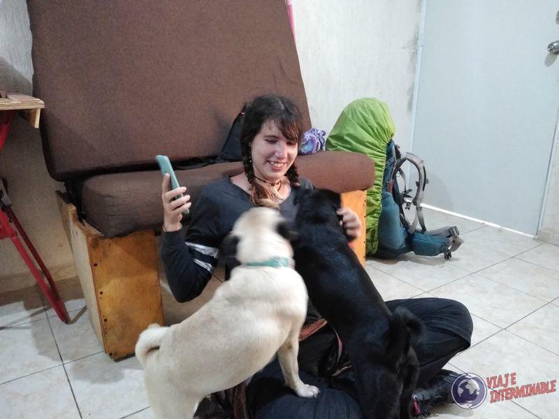 Cuidando Perritos Merida