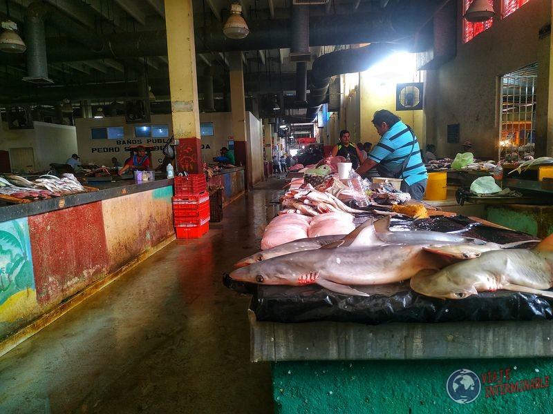 Mercado Campeche pescados tiburones