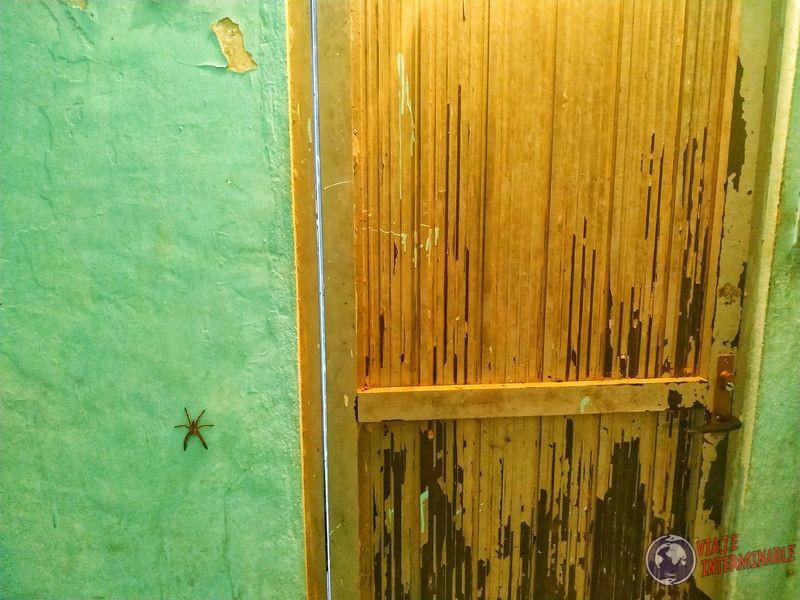Araña en baño de estación Rizo de Oro Mexico