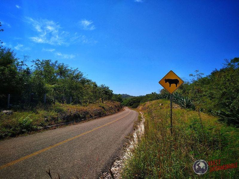 Cuidado con los toros Miguel Colorado Mexico