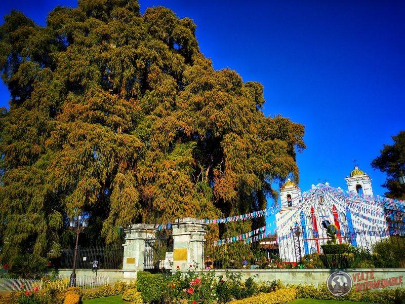 Iglesia de El Tule arbol mas ancho Oaxaca Mexico