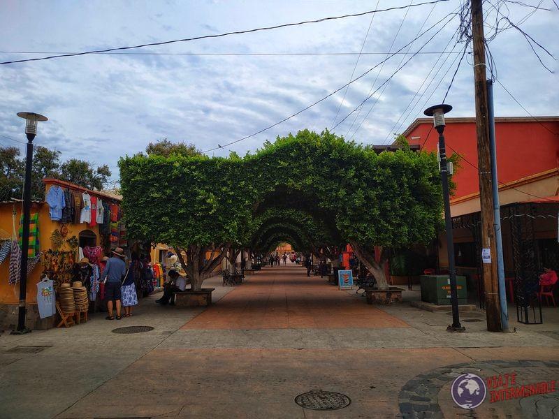 Techo natural en centro Loreto Baja California Mexico