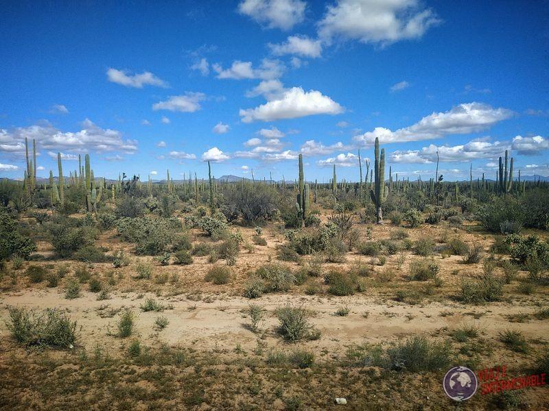 Más cactus hacia Socorrito Baja California Mexico