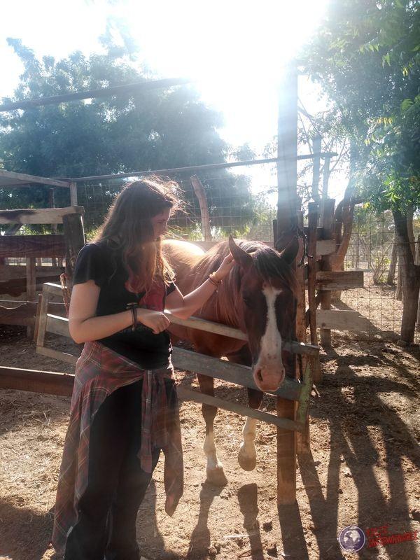 Visita caballos y vacas en Mexico
