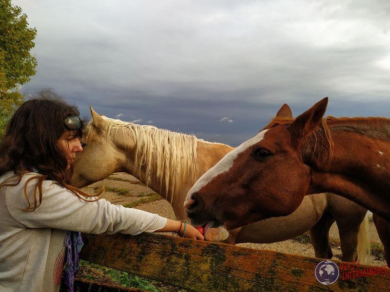Dando de comer a caballos en Minnesota USA