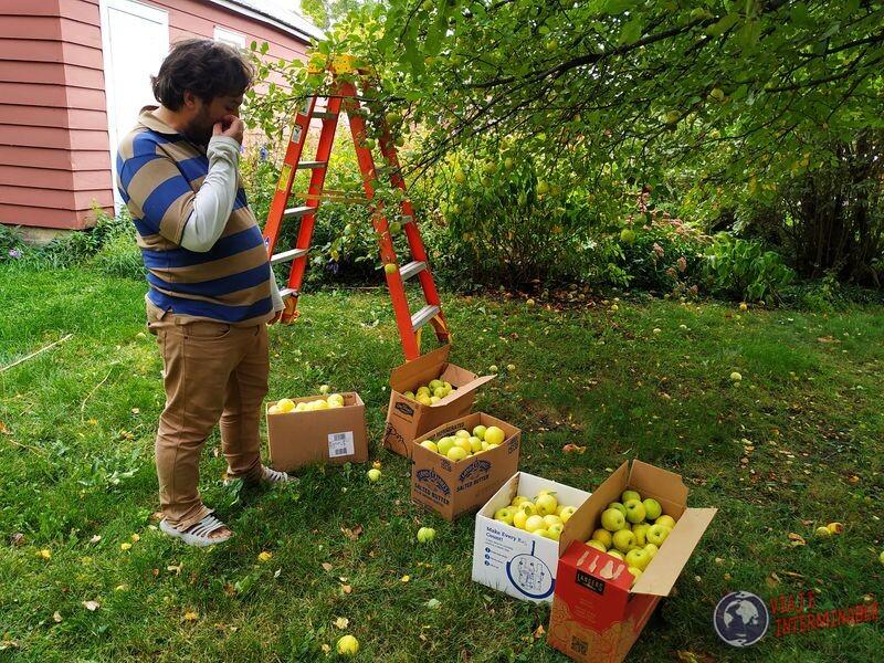 Manzanas recoleccion en granja Minnesota Montevideo EEUU