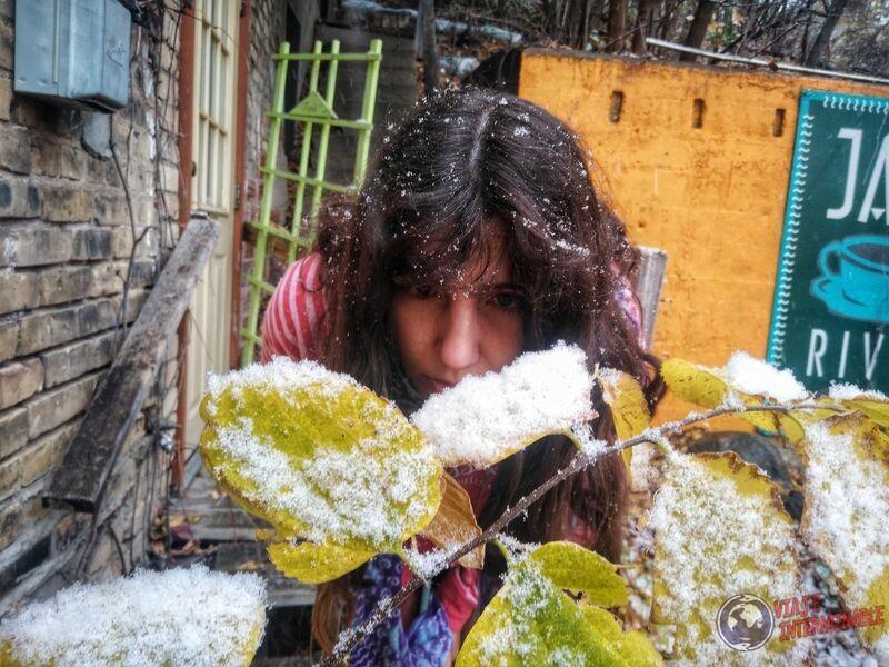 Mirando hoja con nieve Montevideo Minnesota USA