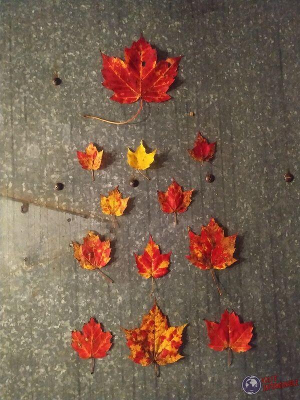 Hojas de colores otoño Norte EEUU USA