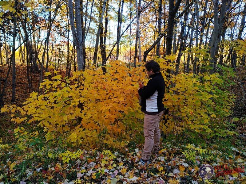Hojas de colores otoño Winsconsin EEUU USA