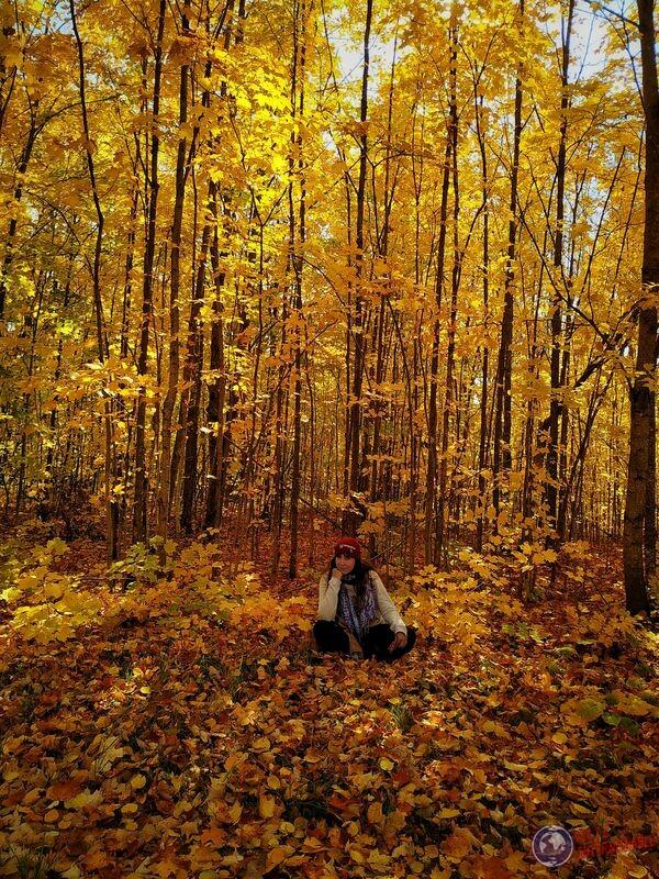 Otoño amarillo Winsconsin EEUU USA
